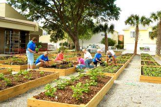 BEAM's organic garden serves the Jacksonville's beach communities.