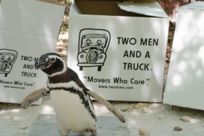 TWO MEN AND A TRUCK and Jacksonville Zoo help mothers